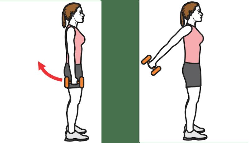Exercice de renforcement musculaire : élévation des bras avec haltères
