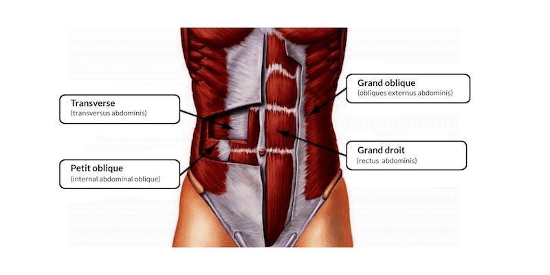 Schéma des abdominaux